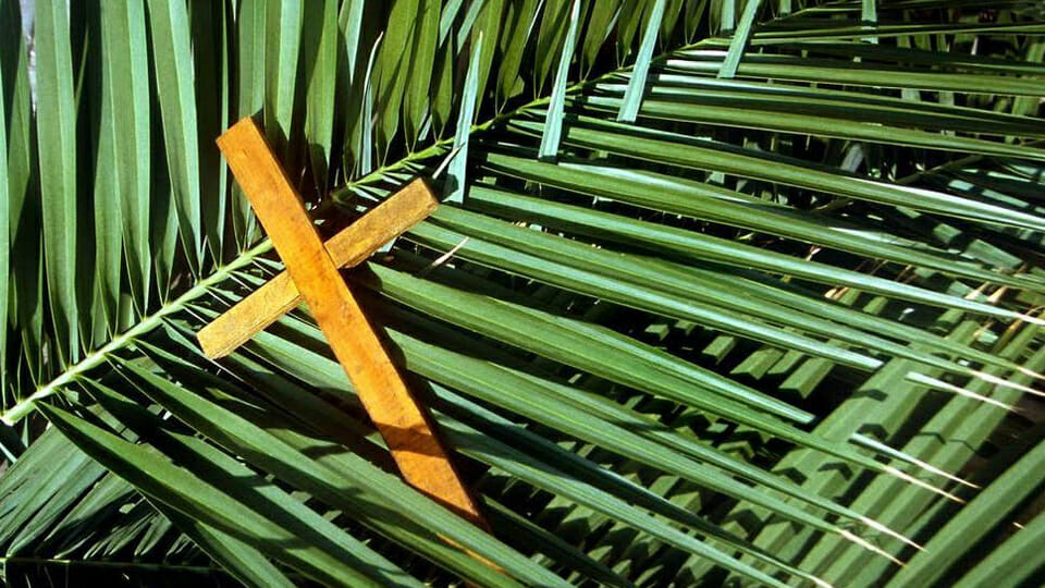 """A branch on the door"": Call to connect on Palm Sunday"