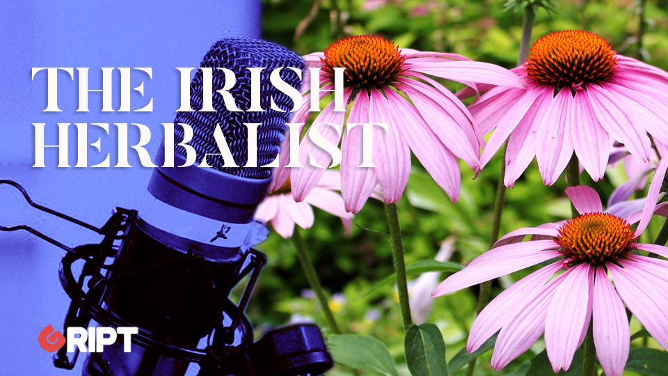 The Irish Herbalist 16 – Echinacea
