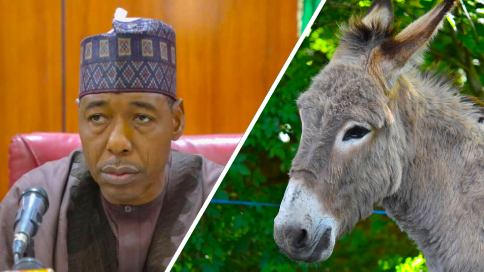 Nigerian governor ambushed by IS militants using explosive donkey