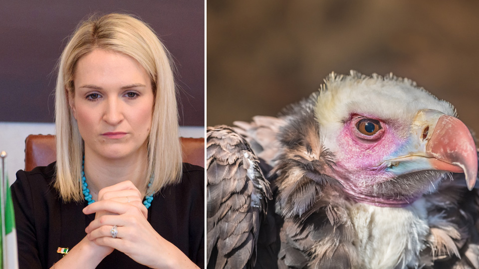 Did Helen McEntee give the Vulture Funds an early Christmas present?