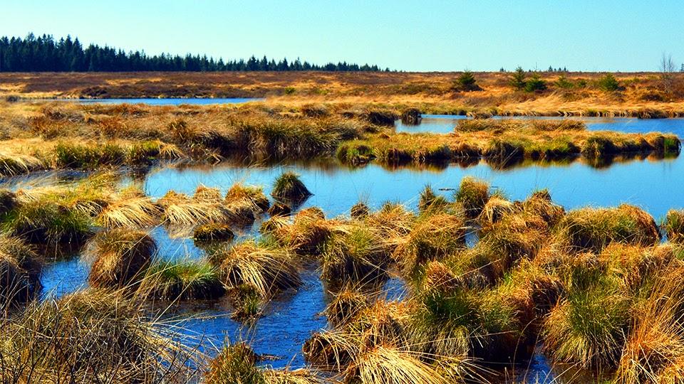 Zero Carbon, Zero Brains: No More Irish Peat Production