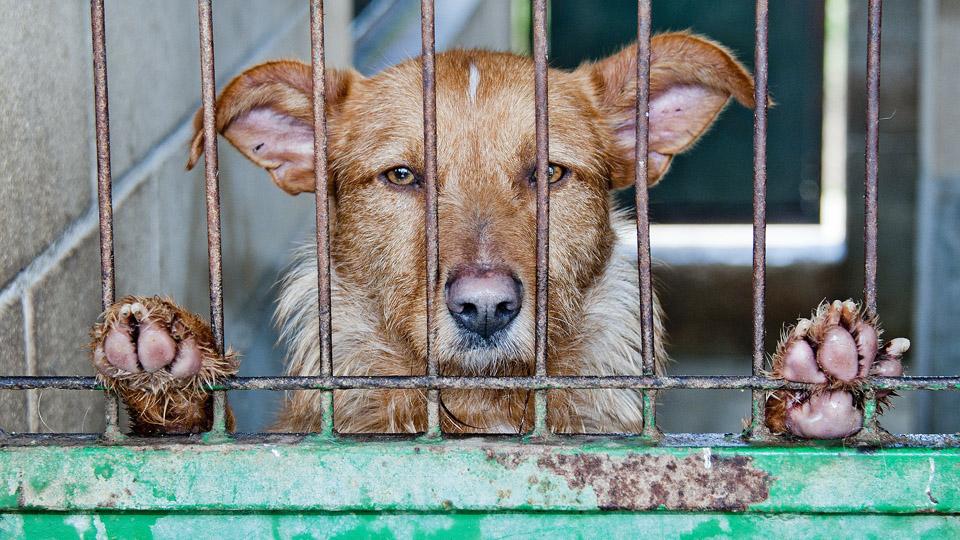 Ashton Dog Pound: Where Dogs were strangled, kicked, and poisoned.