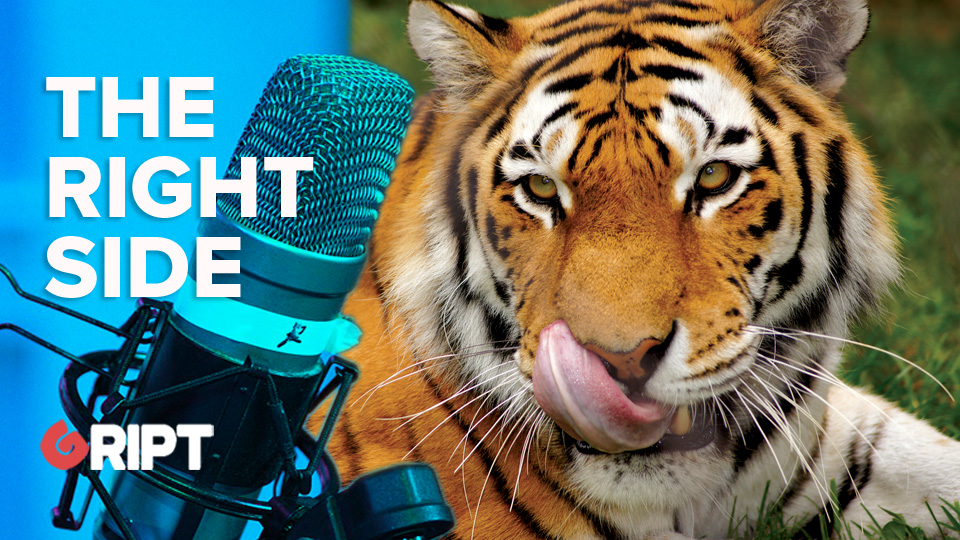 TRSI 236 - We assure you these tigers will never eat your face